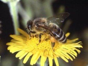 Pollen+Nectar=Honey!