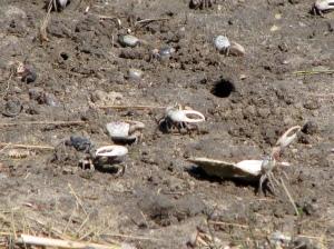Crabs Close Up