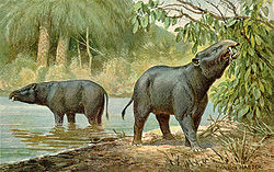 Moertherium, an elephant of a tapir-or elephant!